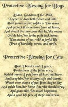 Blessing for Dogs and Cats, witchcraft and white magic spells, animals protection spells, pets spells for protection, powerful spells Witch Spell Book, Witchcraft Spell Books, Magick Spells, Healing Spells, Luck Spells, Summoning Spells, Magick Book, Wicca Witchcraft, Pagan Witch