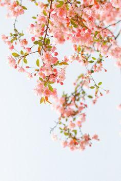 Flower Background Wallpaper, Flower Phone Wallpaper, Butterfly Wallpaper, Flower Backgrounds, Wallpaper Backgrounds, Beautiful Flowers Wallpapers, Beautiful Nature Wallpaper, Pretty Wallpapers, Spring Aesthetic