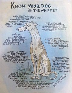 Whippet - done over 25 years ago.