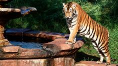 Maharajah Jungle Trek embark on a self-guided tour of Southeast Asia, home to tigers, bats and a Komodo dragon