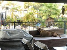 My dog Nala contemplating life http://ift.tt/2r830AO