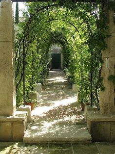 Shaded wrought iron and creeper pathway