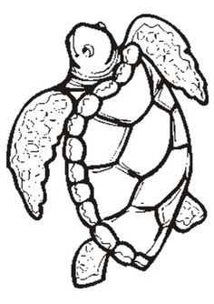 Sea Turtle Life Cycle Coloring Page