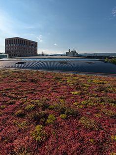 Toiture v g talis e un travail de professionnel pour des toits beaux et colos - Toiture vegetalisee extensive ...