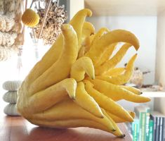 5 Things to do with a Buddha's Hand citrus. They are not at all bitter and good for candied peel Buddhas Hand, Fruit Recipes, Healthy Recipes, Healthy Eats, Raw Recipes, Veggie Recipes, Eating Healthy, Cooking Tips, Cooking Recipes