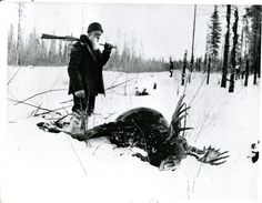 Image of a man (Mr. Berry) with a gun standing next to a dead bull moose Moose Hunting, Bull Moose, Big Game Hunting, Hunting Art, F Pictures, Vintage Pictures, Alaska, Deer Camp, Hunting Pictures