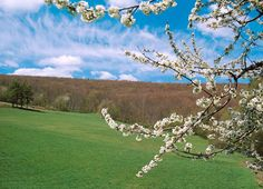 Spring in Krynica-Zdrój.