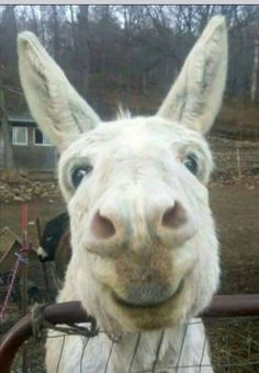 """I get asked all the time, """"What's the deal with donkeys?"""" People need to know that they are sweet, gentle, affectionate, intelligent and a most enjoyable animal to be around. Donkey lovers, please add thoughts and photos and then share this post to friends so they might understand why donkeys are such a big deal to us."""