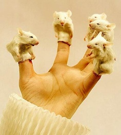 Taxidermy Mice Puppets!!