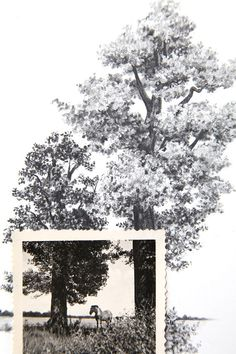 Drawing with Vintage Photo - Horse in Field with Oak trees by Spencer Studio