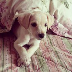 My  Little Dog Tomy!