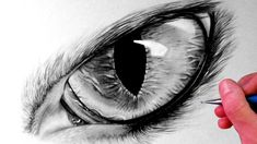 Collection of Wolf Eye Drawing In Pencil Wolf Eye Drawing, Cat Face Drawing, Realistic Eye Drawing, Drawing Faces, Wolf Howling Drawing, Eye Sketch, Drawing Sketches, Sketching, Wolf Sketch