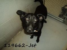 """JET"" needs URGENT rescue/adoption/foster home.  http://www.petfinder.com/petdetail/22698973  CLICK ON FACEBOOK LINK FOR MORE INFO"