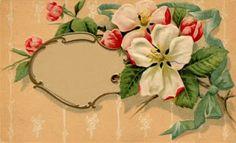 OLD PHOTO ALBUM: old floral postcards