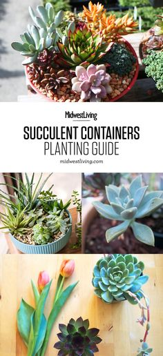 Grow a desert-inspired tabletop garden with hardy succulents. Here are tips for getting your container garden started and caring for your succulents: http://www.midwestliving.com/garden/container/how-to-make-succulent-container-gardens/ #gardeningwithcontainers