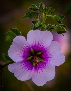 ˚Wild Flower