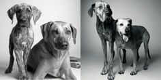 Kayden and Brody. Dog Years: Faithful Friends, Then & Now by Amanda Jones, published by Chronicle Books
