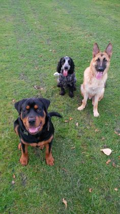 Group sit and stay. We love having fun whilst out and about with our dogs. Obedience training should be part your dogs daily routine.
