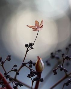 Life is tough, my darling, but so are you !!! 〰Stephanie Bennett-Henry〰  #naturehippys_ #dof_brilliance #dof_addicts #global_ladies #lovelydeadcrap #everything_imaginable #heart_imprint #flowersandmacro #bokeh_kings #bokeh_love_tr #princely_shotz #finland_photolovers #naturelover_gr #ig_myshot