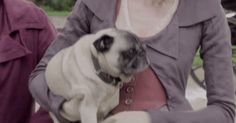 New trendy GIF/ Giphy. dog puppy pbs poldark pug caroline pugs cute puppy masterpiece horace. Let like/ repin/ follow @cutephonecases
