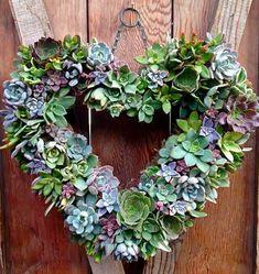 Living succulent heart wreath
