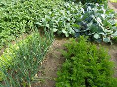 Warzywnik w ogrodzie: jak uprawiać warzywa i zioła - - strona 1 - wymarzonyogrod.pl Humming Bird Feeders, My Secret Garden, Organic Farming, Garden Gates, Pest Control, Vegetable Garden, Orchids, Survival, Traditional