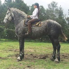 What a gorgeous big horse! Animals Beautiful, Show Horses, Horse Lover, Cute Animals, Horse Rider, Horse Barns, Equines, Big Horses, Horse Breeds