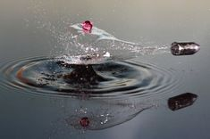 "High Speed Photography by Lex Augusteijn. Lex Augusteijn is an amateur Dutch photographer specialising in high-speed photography. He says: ""The images are High Speed Photography, Action Photography, Reflection Photography, Still Life Photography, Photography Ideas, Water Photography, Creative Photography, Amazing Photography, Shutter Photography"