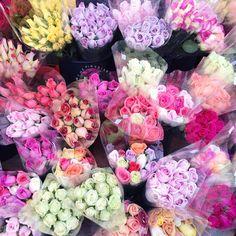 colorful roses // loveTPD.com