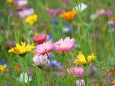 Muchas flores de colores