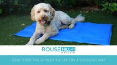 Gel cooling mats are a great way to help you pets cool off