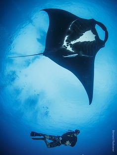 DUI trips to Socorro Island - visit the home of some amazing big critters!