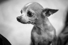Retrato by Roberto Carlos Garza - Photo 138690237 - Dogs, Animals, Roberto Carlos, Portraits, Animaux, Doggies, Animal, Animales, Pet Dogs