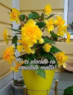 Good Morning, Character Design, Plants, Motto, Facebook, Buen Dia, Bonjour, Plant, Good Morning Wishes