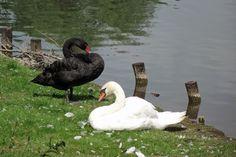 Schwarz und Weiß. Oder: Gegensätze ziehen sich an. http://fc-foto.de/31570177
