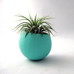 Single Air Plant Container Pod Blue Vessel // Home and Living // Indoor Garden … - All For Herbs And Plants Container Plants, Container Gardening, Gardening Tips, Indoor Gardening, Vegetable Gardening, Air Plants, Indoor Plants, Cactus, Garden Planters