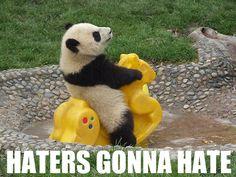 PANDA. I love you, pandas.