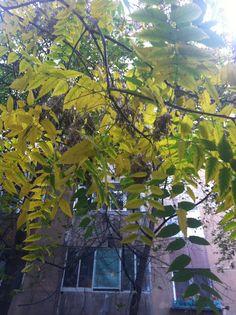Yellow autumn All Things, Aquarium, My Photos, Autumn, Yellow, Plants, Fall, Plant, Aquarius