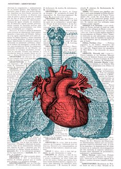 Heart and Lungs Anatomy book page Print on Vintage Encyclopedic page.