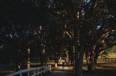 The Groom awaits his bride for their first look. #Wedding #FirstLook #OakTrees #Path #Sunset #Florida #GrandOaksResort