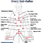 Ovaries and terminal ileum