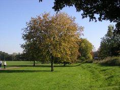 Kingsmead Park