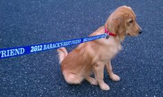 Spotted: 2012 Barack's Best Friend leash!