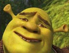 Funny Profile Pictures, Funny Reaction Pictures, Meme Pictures, Stupid Funny Memes, Funny Relatable Memes, Hilarious, Memes Shrek, Dankest Memes, Shrek Funny