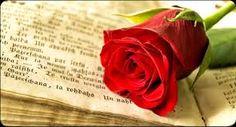 rosa i llibre