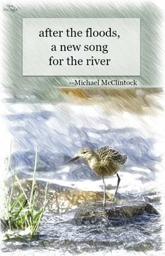 Haiku poem: after the floods -- by Michael McClintock. ( although not a flood, I relate to this after our newly acquired river front property and of rain. Water Poems, Very Short Poems, Haiku Poem, Japanese Poem, Poetry Inspiration, Writing Poetry, More Than Words, Poetry Quotes, Rainy Days