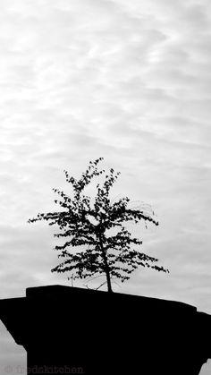 Paris -  Concrete jungle  © Fredskitchen