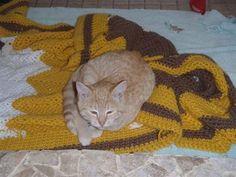 A Sleepy Fan of Ours - http://www.thecutestkitties.com/a-sleepy-fan-of-ours/