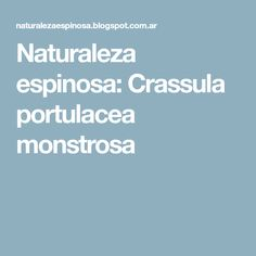 Naturaleza espinosa: Crassula portulacea monstrosa