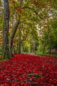 Photograph Autumn Path... by Martin Kavanagh on 500px